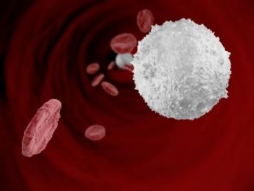 поднять лейкоциты