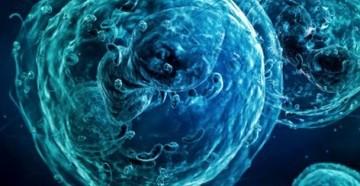 лимфоциты понижены