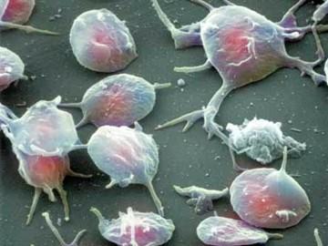 повышение тромбоцитов у ребенка