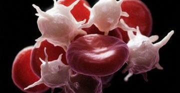 средний объем тромбоцитов