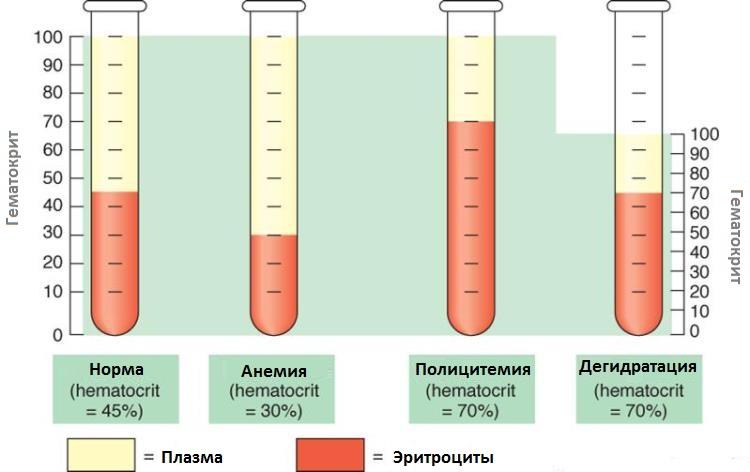 gematocrit
